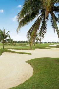 palm-tree-course
